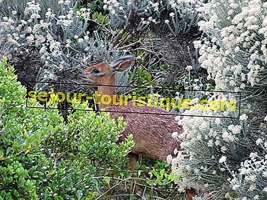 Des animaux indigènes impressionnants que vous devez voir en Afrique du Sud
