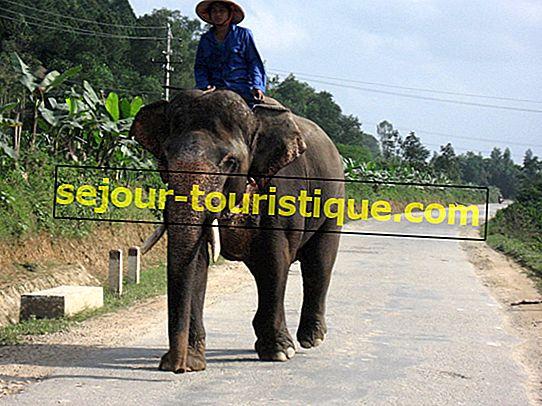 11ベトナムで見なければならない素晴らしい動物