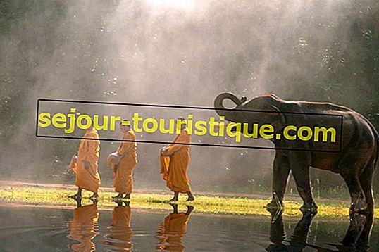 タイで見つけられる11の素晴らしい動物