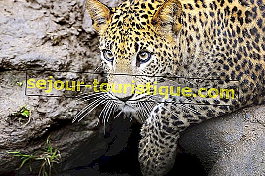 13スリランカで見ることができる素晴らしい動物