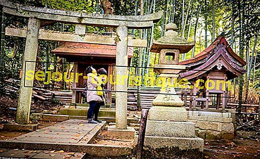 6 ngôi đền đẹp nhất ở Kyoto