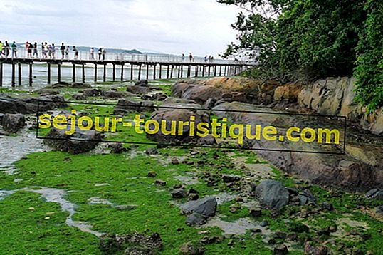 5 Hal Terbaik yang Dapat Dilakukan di Pulau Ubin, Singapura