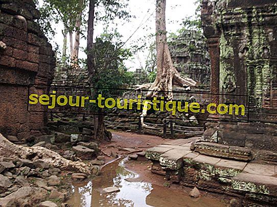 Ta Prohm: Kuil 'Tomb Raider' Kamboja