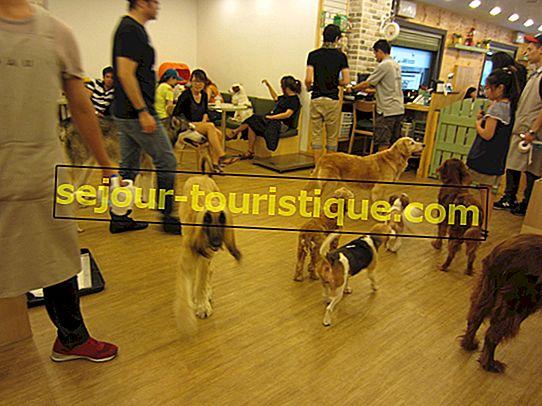 Tur Liar di Pet Café Terbaik Seoul