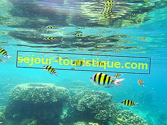 8 spots de plongée célèbres en Thaïlande