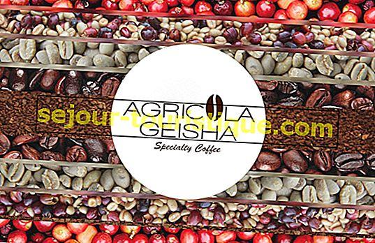 Geisha Coffee: Wat te weten over de bekroonde koffie van 2018