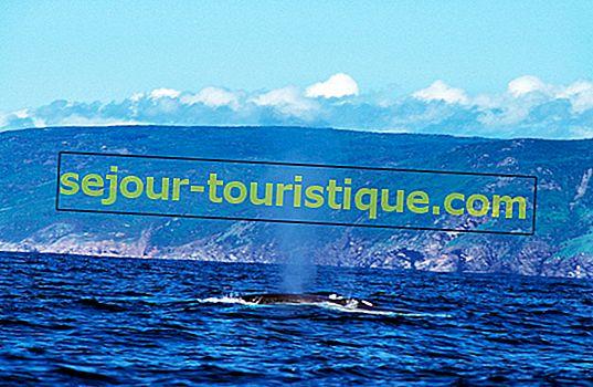 Kinh nghiệm xem cá voi tốt nhất ở Nova Scotia