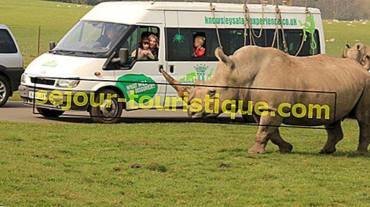 6 Taman Safari di Inggris untuk Dikunjungi Bersama Keluarga Anda