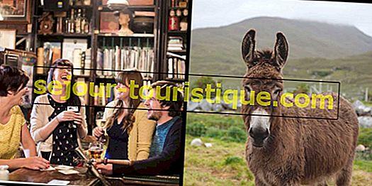 Termes de l'argot irlandais que vous devez connaître