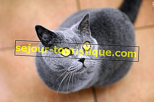 Top 10 katten afgebeeld in beroemde kunst