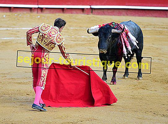 Bagaimana Menghadapi Perlawanan Lembu di Sepanyol