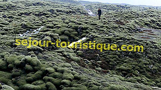 Pourquoi devriez-vous visiter le champ de lave Eldhraun d'Islande au moins une fois dans votre vie