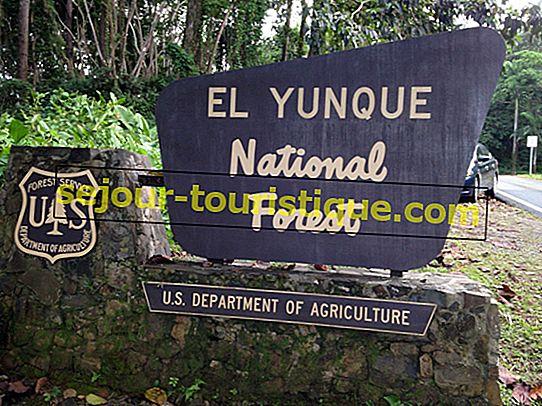 10 choses à savoir avant de visiter la forêt tropicale d'El Yunque