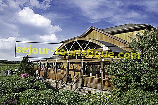 Vườn nho và nhà máy rượu vang tốt nhất trên Long Island, NY