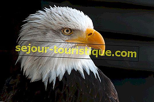 21 foto's van prachtige dieren die je in Canada zult vinden