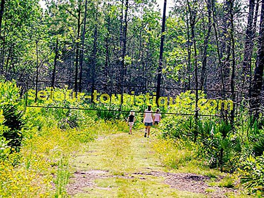 10 Jalur Lintas Alam Terbaik di Orlando