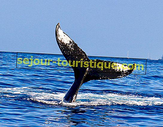 5 điểm ngắm cá voi tốt nhất ở Washington