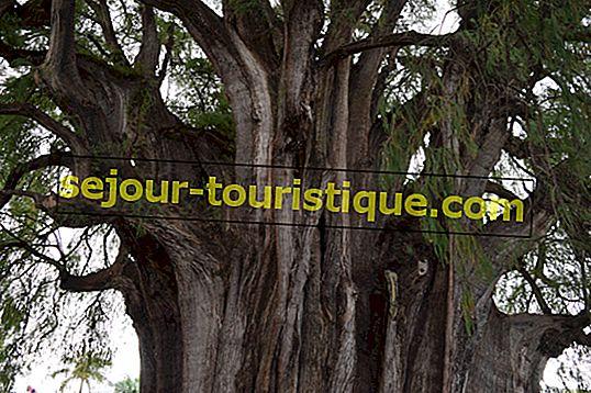 Mexikos unglaubliche Bäume, Pflanzen und Blumen und wo man sie findet