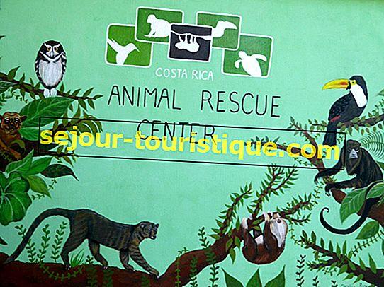 Die besten Tierrettungszentren und Schutzgebiete in Costa Rica