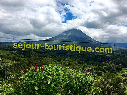 11 Haiwan Native Awesome yang Harus Anda lihat di Costa Rica