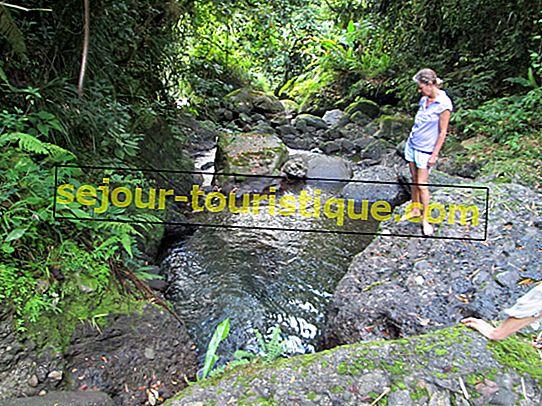 Ein Leitfaden zum Wandern in den Jamaican Blue Mountains