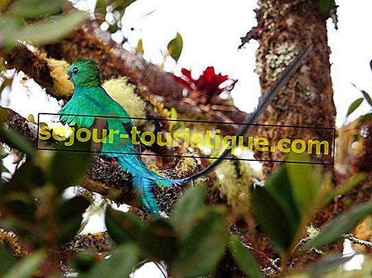 ケツァールがグアテマラの国鳥になった経緯