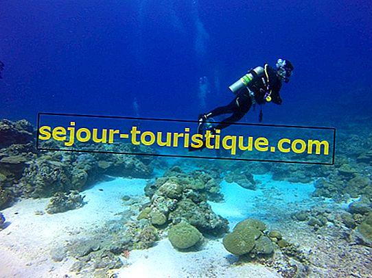 Các điểm lặn và lặn tốt nhất ở Cuba