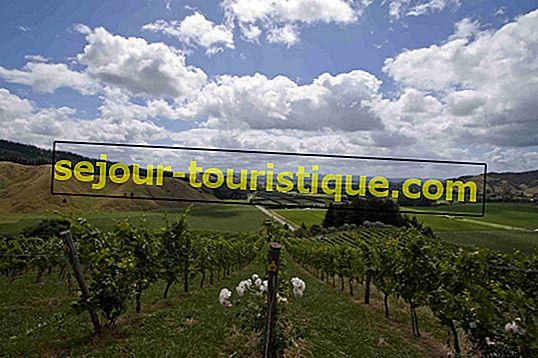 Die Top 10 Weingüter in Neuseeland
